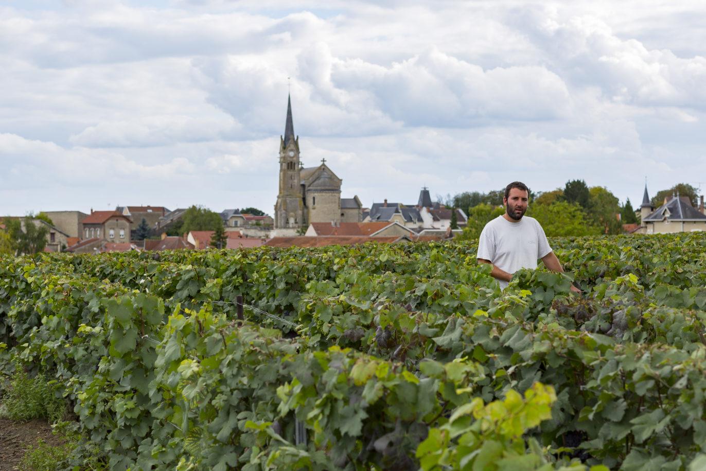 Brimont pendant les vendanges, vu depuis les vignes Hotte-Schmit. Un vendangeur passe entre deux rangs.
